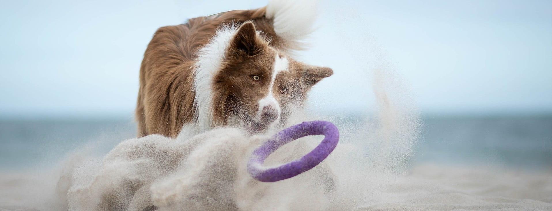 Ein Hund mit Spielzeug